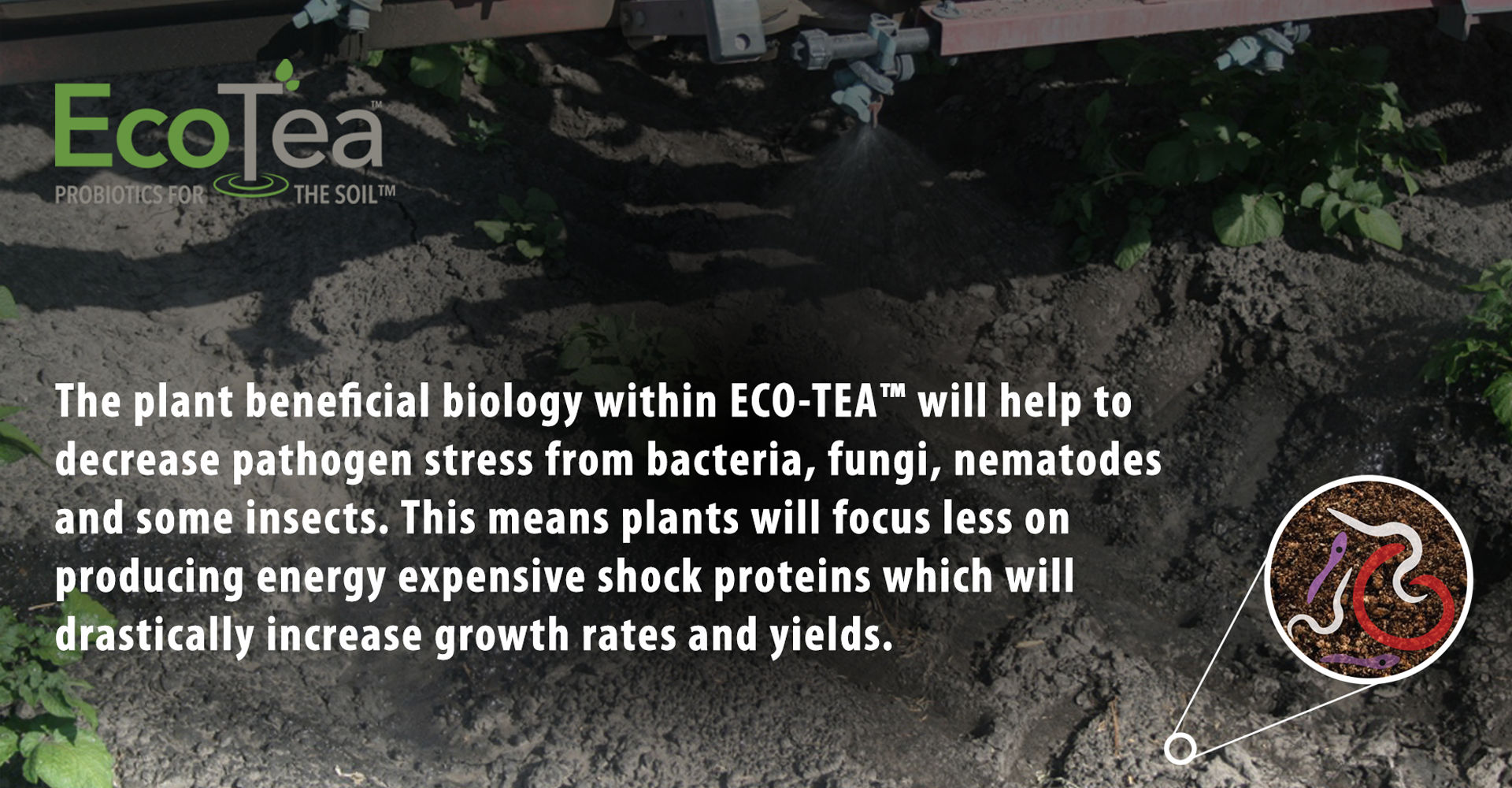 Eco-Tea will increase biomass and root function